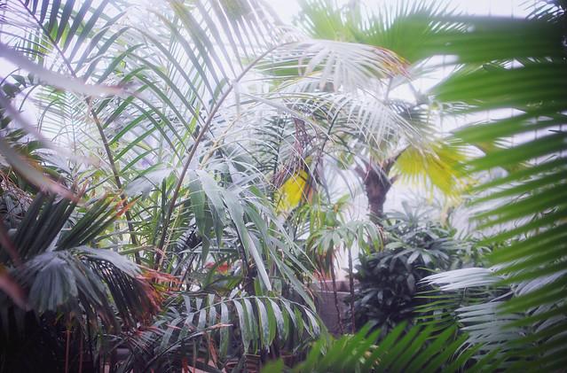 Kew Botanical Garden