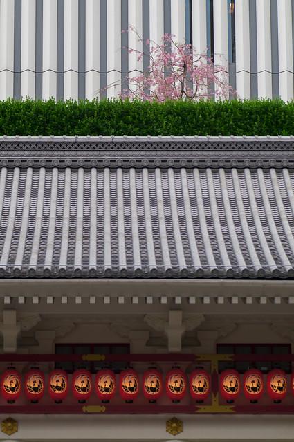 歌舞伎座の阿國桜が咲いていました : 屋上庭園