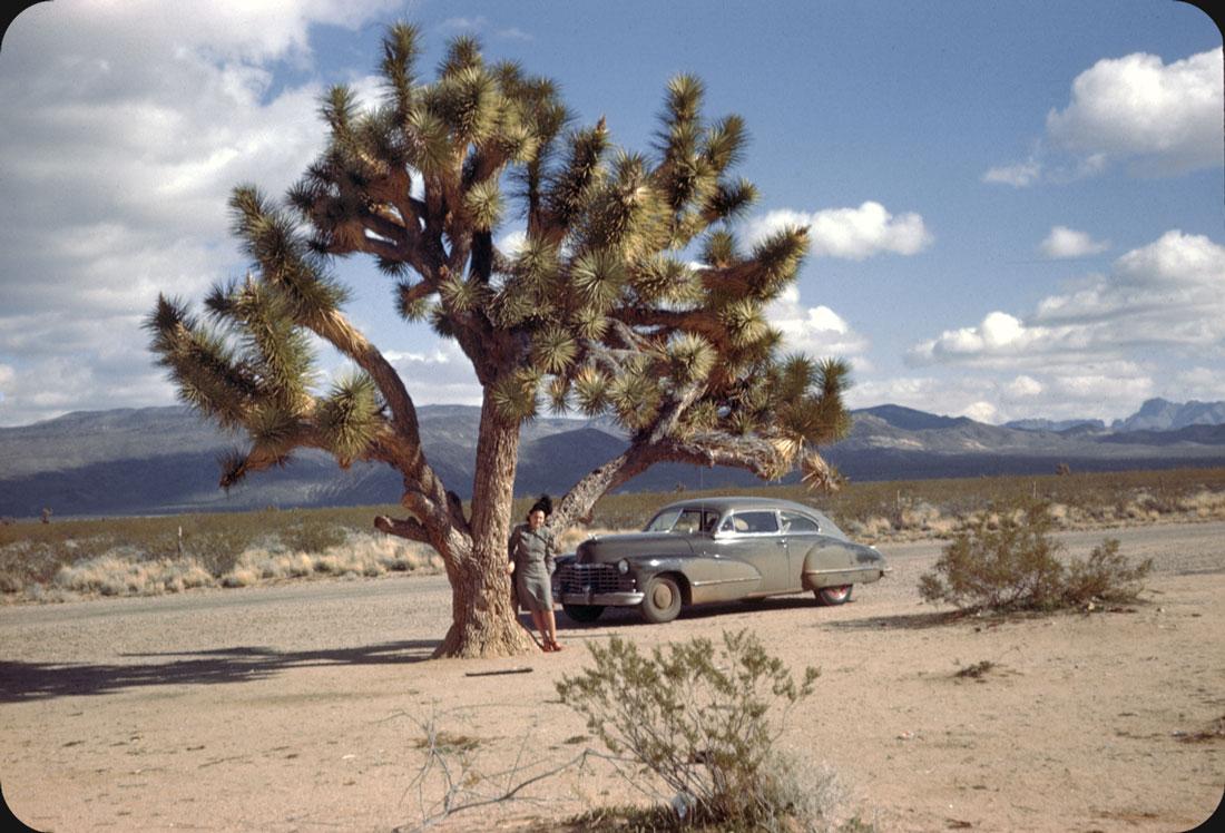 Joshua Tree — 1947