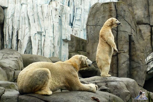 Tierpark Hagenbeck 25.04.2015   136