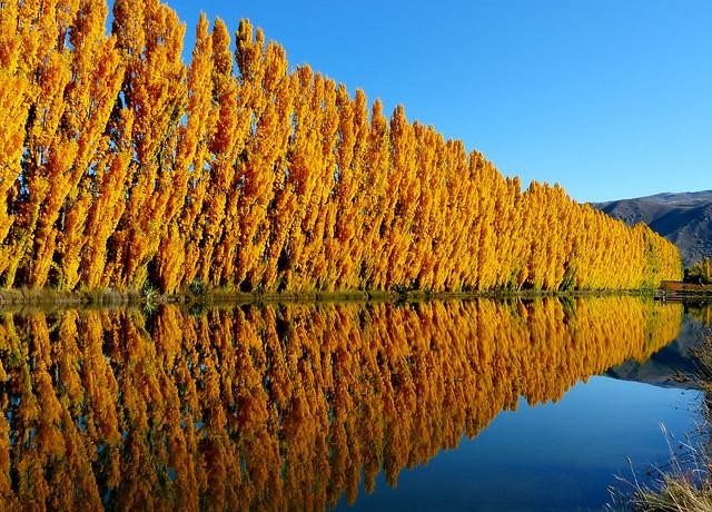 Gold rush. Otago.