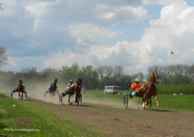 Конный забег в Дибровке, конный завод