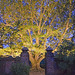 Dumbarton Oaks, Georgetown, Washington DC. 2015. Photo courtesy Outdoor Illumination, Inc.
