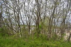 004 Crump Park