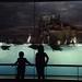 Port of Nagoya Public Aquarium by rodliam