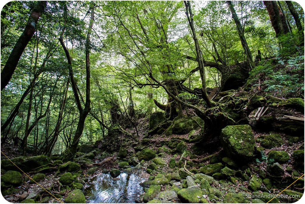 2015-05-06-20150506(Canon EOS 6D)-00090