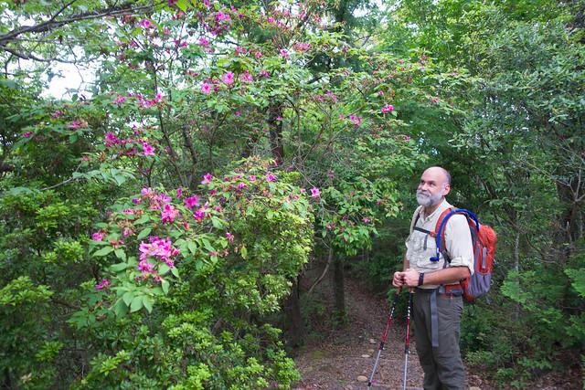 Admiring the wild azaleas