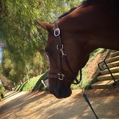 Enjoying my day with this handsome guy!!! ❤️🐴❤️#Carthago #LoveMyHorse❤️