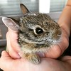 Baby cottontail in our yard this evening