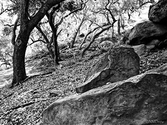 Rocks & Trees