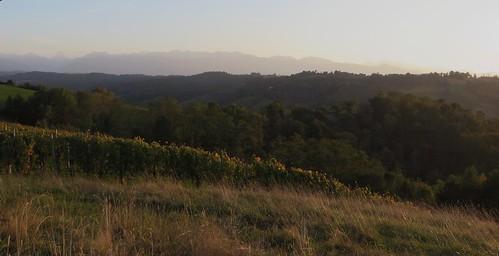 Fin d'après-midi en automne, route de la chapelle de Rousse, Jurançon, Béarn, Pyrénées Atlantiques, Aquitaine, France.