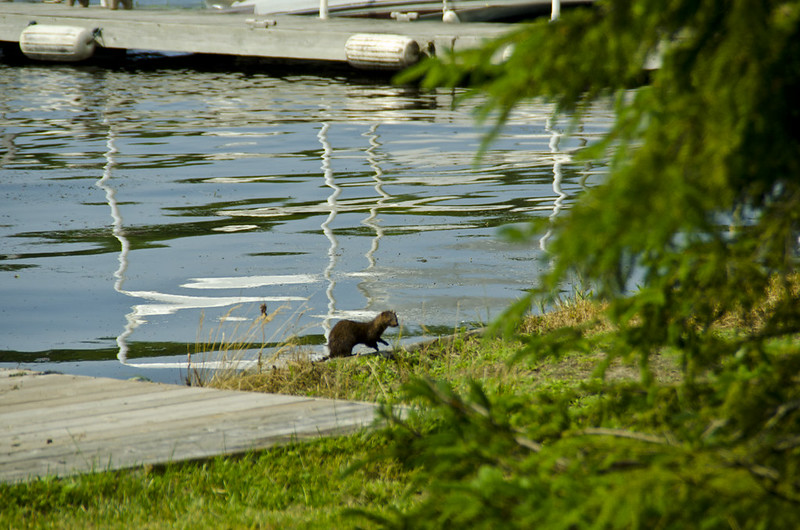 Port Severn wildlife