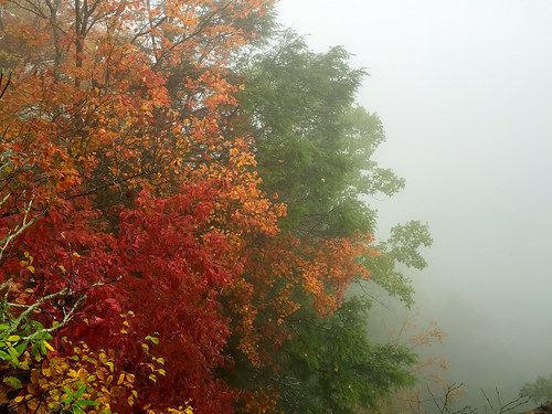 autumn tree fall fog all beaver westvirginia grandview 2014 grandviewstatepark