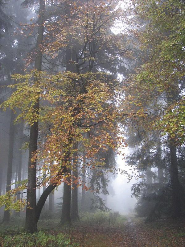 November Fog 6