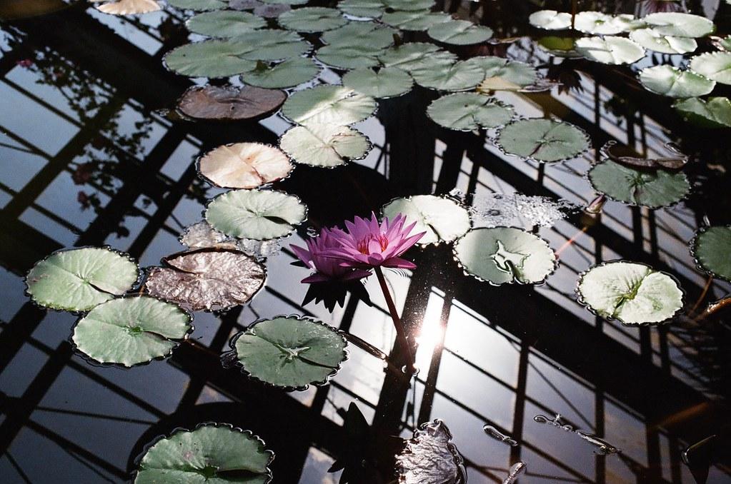 Botanical Garden Hokkaido Univ.