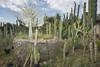 Sherman's Garden, no. 6; Sunnyslope