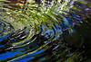 Botanic Gardnes-023