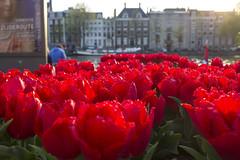 NEDERLAND - Amsterdam 066