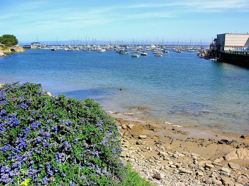 california flowers beach boats monterey sand rocks purple montereybay pacificocean fishermanswharf seaotter montereypeninsula joelach