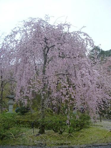 tenruji temple garden 4