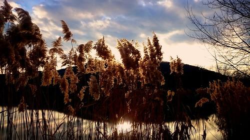 sunset lake reed spring hungary tolnamegye