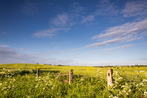 old blue summer sky cloud field yellow fence spring post path decay meadow pasture posts derelict oilseedrape 06hardgrad