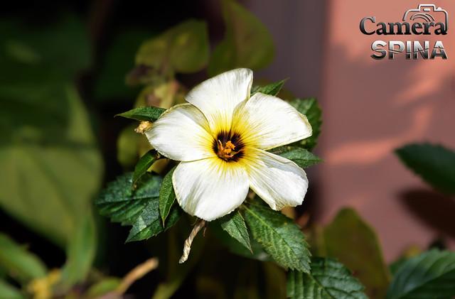 Flor 045