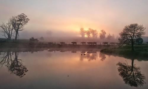 Misty morning in Vacy