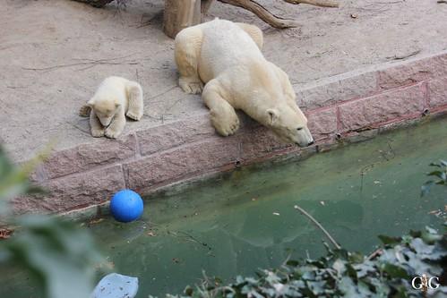 Zoo Rostock 11.04.2015137