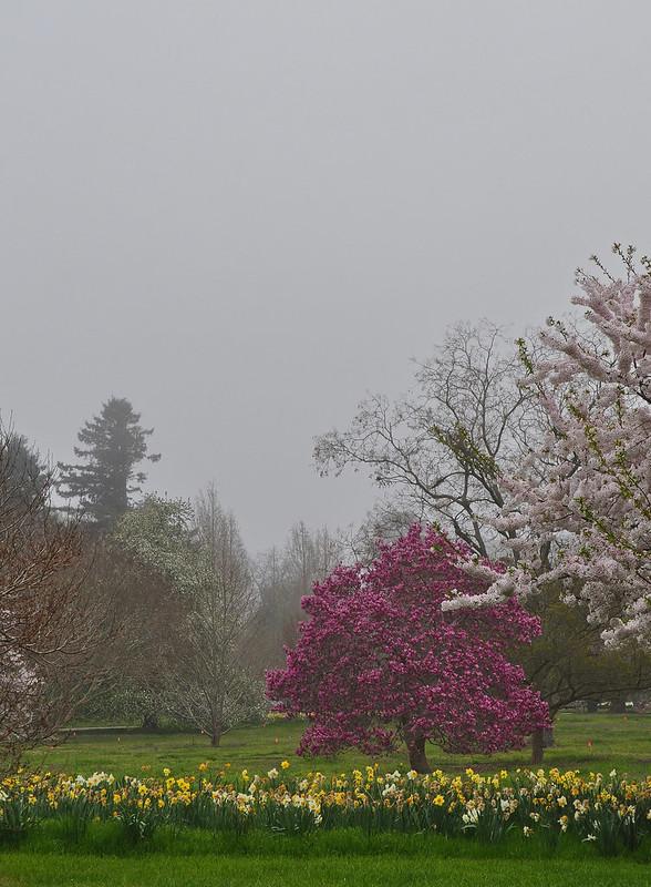 Flowering Arboretum (1)