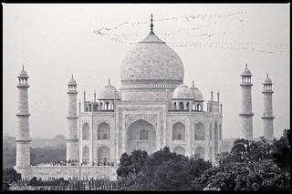 migration birds / Agra , India