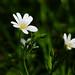 Flowers in the woods.. by jo.pinkroses7