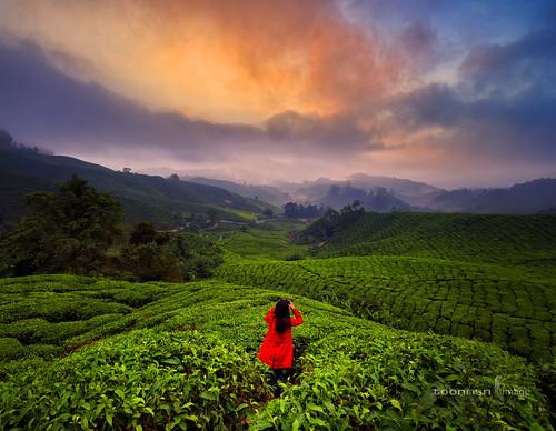 sunrise malaysia cameronhighlands pahang toonman