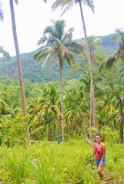 Janna Palm Trees