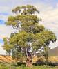 tree - impressive