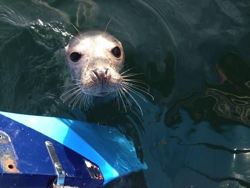 Seal Pup April 2015