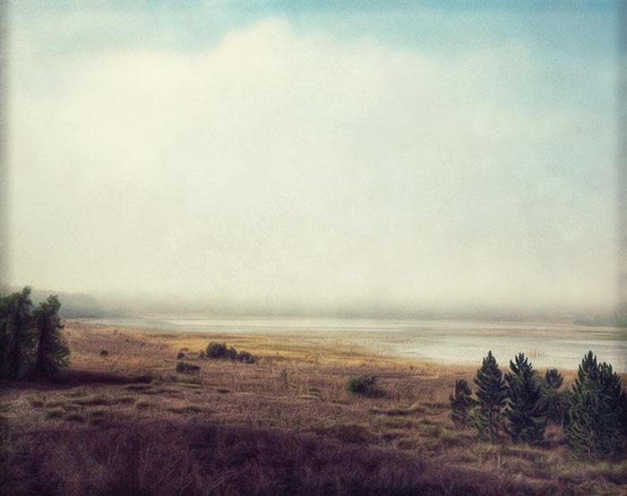 Marsh pines