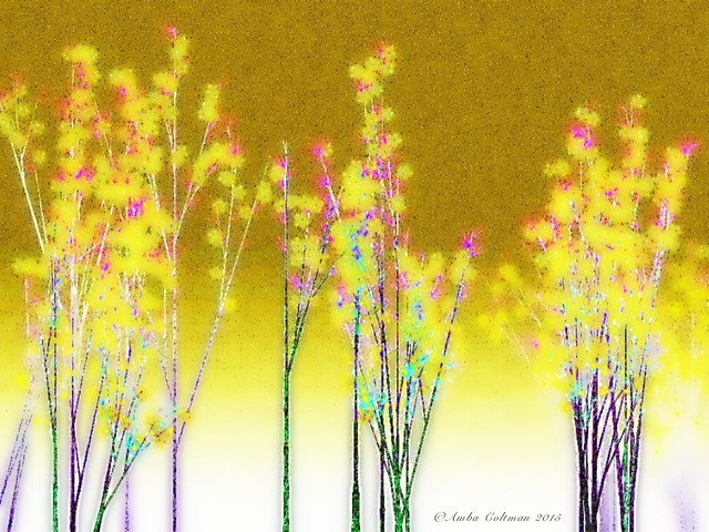 Forsythia Blooming