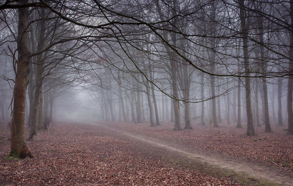 Misty Ride, Friston Forest