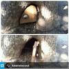 #Repost @keaneiscool ・・・ Into the rabbit hole... @GoldenGatePark