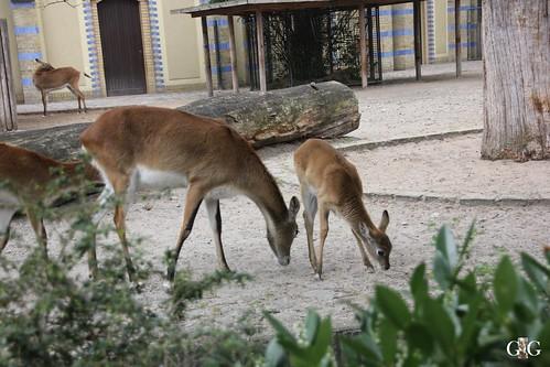 Zoo Berlin 26.04.201564