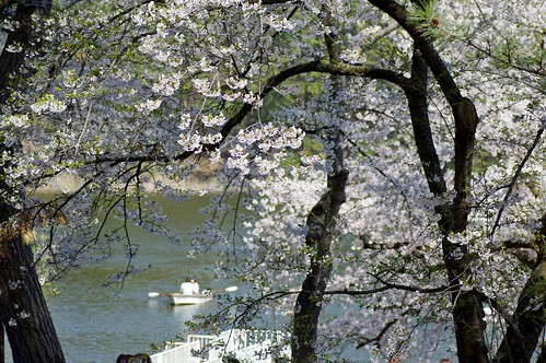Pond of spring