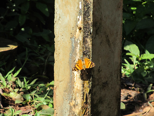 Les chutes d'Iguazu: nous rencontrons aussi de jolis papillons