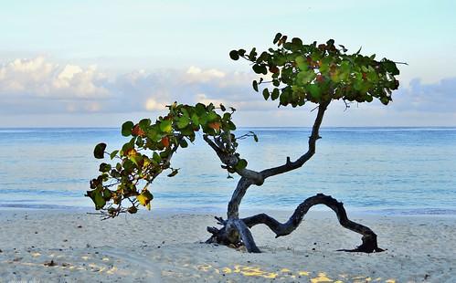 sea tree beach nature clouds sunrise nuvole mare alba cuba albero spiaggia nikond3200 miriamulivi