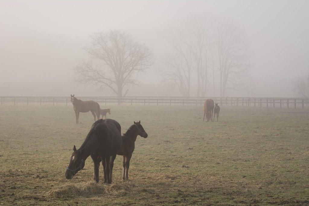 靄の中の親仔達