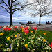 Springtime at Lake Neuchatel, Switzerland by ` Toshio '