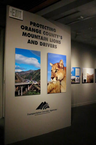 Learn how one government agency is committed to protecting mountain lions and drivers through the use of special fencing; wildlife undercrossings; surveillance; and GPS tracking. thetollroads.com/communications/cougar-exhibit.php