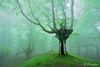 magical forest with fog in spring