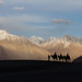 Camel Safari at Nubra Valley by Navaneeth Kishor