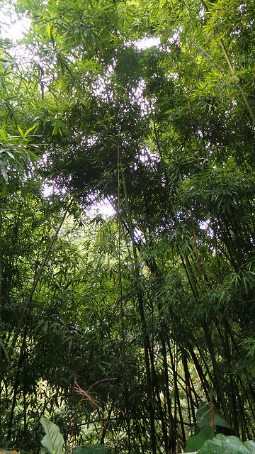 Durchfahrt Bambus